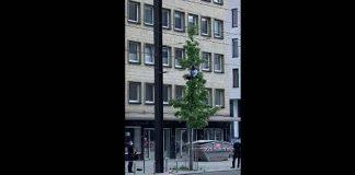 """""""Zpátky na stromy!"""" To není Afrika, to je německý Hannover (video)"""
