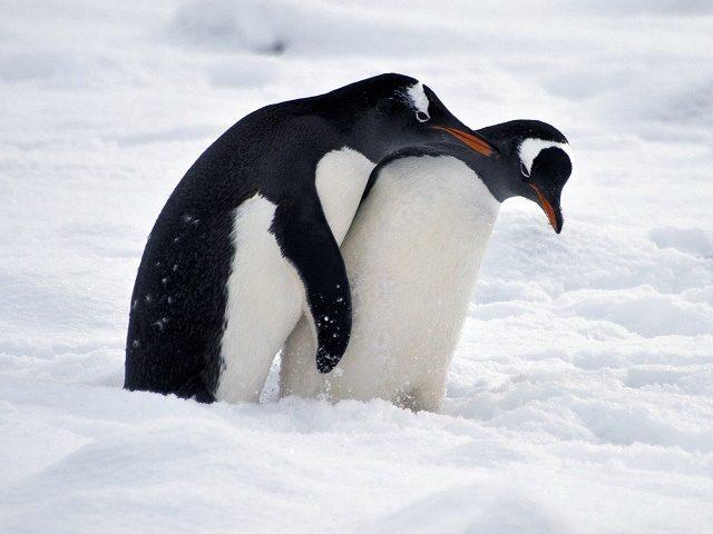 Antarktida zažila nejhorší mrazy od začátků měření – to je to globální oteplování?
