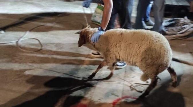 Na Lampedusu připlula loď s Tunisany, měli s sebou živou ovci