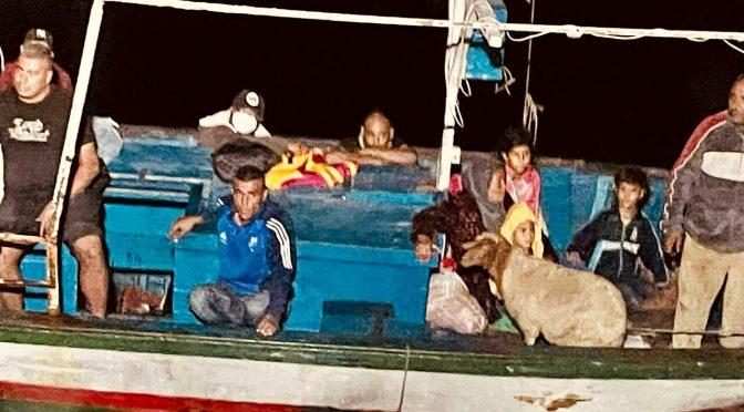 Ovce Dina, která připlula na lodi spolu s 13 Maročany, dostala azyl v Itálii
